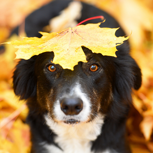 Dog with leaf on head